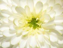 Belle fleur blanche photographie stock libre de droits
