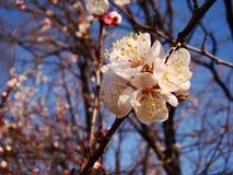 Belle fleur blanche Photos libres de droits