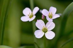 Belle fleur blanche Photos stock