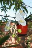 Belle fleur blanche avec plusieurs bourgeons photographie stock libre de droits