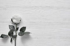 Belle fleur blanche sur le fond en bois clair L'espace pour le laboratoire Photos libres de droits