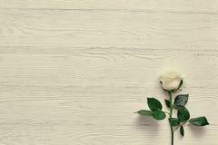 Belle fleur blanche sur le fond en bois clair L'espace pour le laboratoire Photo libre de droits