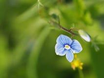 Belle fleur bleue Photo stock
