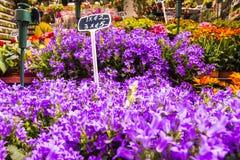 Belle fleur colorée à vendre Image libre de droits