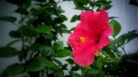 Belle fleur colorée images stock