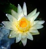Belle fleur colorée image stock