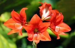 Belle fleur colorée magnifique étonnante de fleur jaune et orange photographie stock
