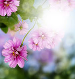 Belle fleur d'été sur un backgro d'abrégé sur tache floue Images stock