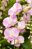 Belle fleur d'orchidée Images stock