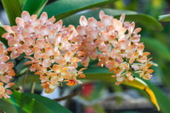 Belle fleur d'orchidée dans le jardin à l'hiver ou à la journée de printemps photo stock