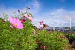 Belle fleur dans la ferme de moulin de vent Images libres de droits