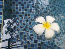 Belle fleur dans la piscine images libres de droits