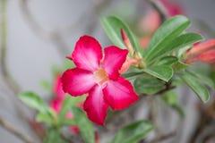 Belle fleur dans le jardin Image libre de droits