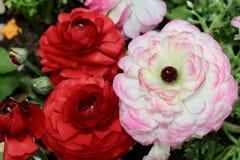 Belle fleur dans le jardin Images libres de droits