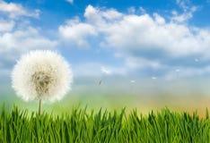 Belle fleur dans le jardin sur le plan rapproché de fond de ciel Images stock