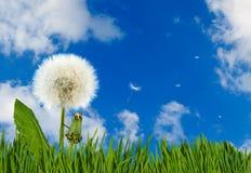 Belle fleur dans le jardin sur le plan rapproché de fond de ciel Images libres de droits