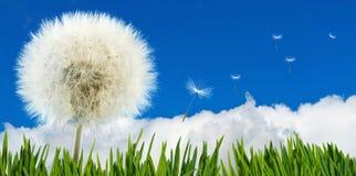 Belle fleur dans le jardin sur le plan rapproché de fond de ciel Photo stock