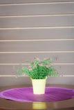 Belle fleur dans le pot de fleurs Photographie stock