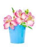Belle fleur dans un seau Photos libres de droits