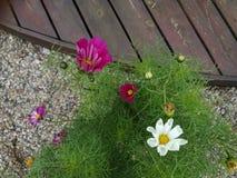 Belle fleur de colorfull dans le jardin Images stock