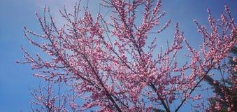 Belle fleur de couleur rose images stock