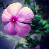 Belle fleur de floraison Photographie stock