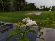 Belle fleur de lis dans la mousson image image stock