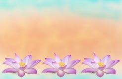 Belle fleur de lotus dans la floraison photographie stock libre de droits
