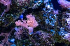 Belle fleur de mer en monde sous-marin avec des coraux et des poissons images stock