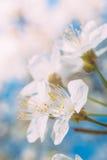 Belle fleur de ressort de l'arbre Photographie stock