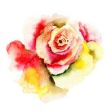 Belle fleur de Rose Photo libre de droits