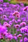 belle fleur en nature Photographie stock libre de droits