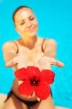 Belle fleur femelle de rouge de fixation photo stock