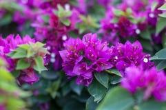 belle fleur fra?che avec la photo lumineuse de feuilles vertes photographie stock