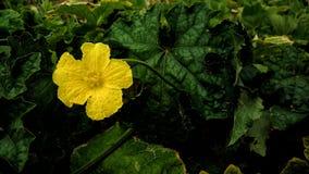 Belle fleur jaune photographie stock