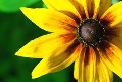 Belle fleur jaune Photo libre de droits