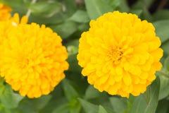 Belle fleur jaune Photo stock