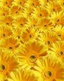 Belle fleur jaune Image stock