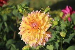 Belle fleur jaune Image libre de droits