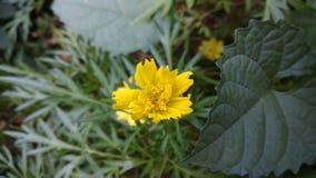 Belle fleur jaune dans un jardin images stock