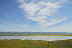 Belle fleur jaune de goldifelds avec le lac soda photographie stock libre de droits