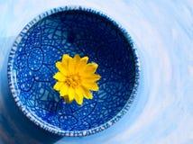 Fleur jaune dans le plat bleu Photographie stock libre de droits