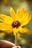 Belle fleur jaune lumineuse à disposition abrégez le fond L'espace à l'arrière-plan pour la copie, texte, vos mots Photographie stock