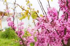 Belle fleur lilas pourpre Images stock