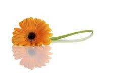 Belle fleur orange photo stock