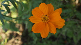 Belle fleur orange Photos libres de droits