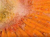 Belle fleur orange lumineuse Image libre de droits