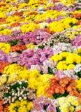 Belle fleur ordinaire photos libres de droits