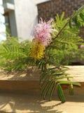 Belle fleur par SK photographie stock