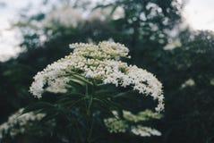 Belle fleur pendant le matin Images stock